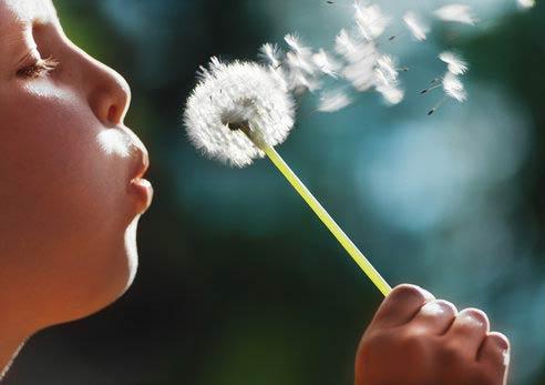 spring allergies denton allergist